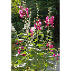 hollyhocks, 2007 I 20 x 30 inches I edition 5